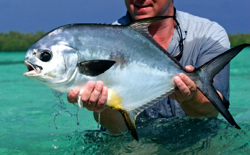 1ecb133f65e00 ... Turneffe Atoll Trust has worked with Dr. Aaron Adams who was initially  with Mote Marine Laboratory in Florida and now the Executive Director of  Bonefish ...
